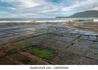 Tesselated Pavement, coastline, Tasmania