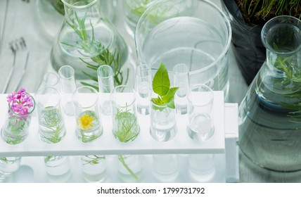 Test tubes with parts of plant and flowers for studying botany science research in glassware or flasks measuring beaker. The small plants in test tubes at lab. Science lab research and development. - Shutterstock ID 1799731792