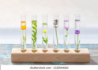 Test tubes with perfume samplesFlowers and plants in test tubes on wooden background. T