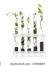 Test tubes with plants on stand isolated on white
