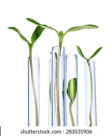 Test Tubes with small plants Isolated on white. Genetically Modified Organisms