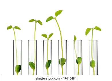 Test Tubes with small plants,Isolated on white.
