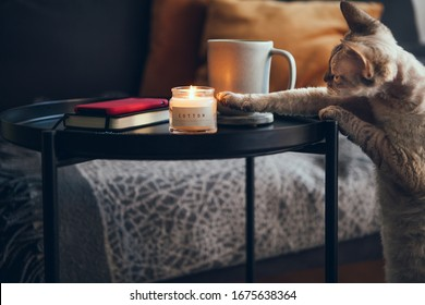 Testing at home after working, offline. Drinking cup of tea, enjoying candle light and aromatherapy. Relaxing at home with cat. Natural light