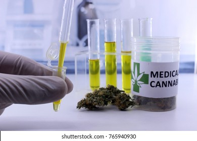 Testing marijuana buds for the extraction of medicinal oil