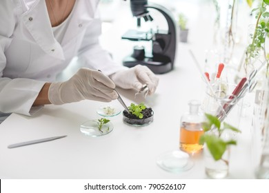 Testing plants in the laboratory