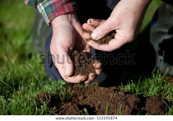 Erprobung des Bodens auf alten Weiden.