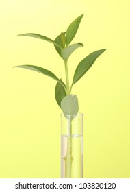 Test-tube with a transparent solution and the plant on yellow background close-up