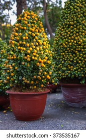Tet Kumquat Trees the symbols of Lunar New Year Holidays at the street market, Ho Chi Minh City, Vietnam.
