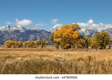 Teton Autumn landscape