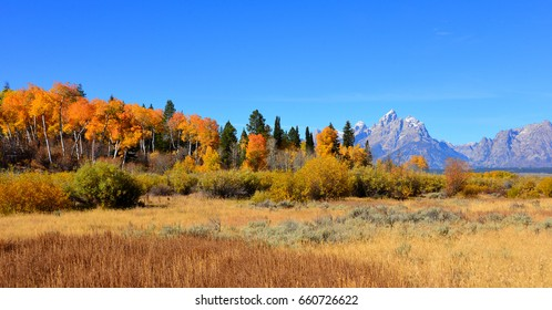 Teton mountain range with colorful fall trees