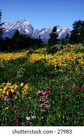 Teton Mountains in early spring.
