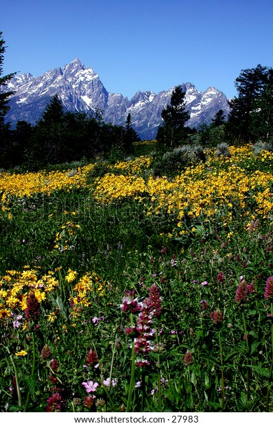 Teton Mountains in early spring.