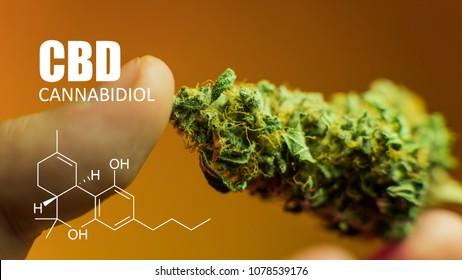 Tetrahydrocannabinol THC,  lipid found in cannabis
