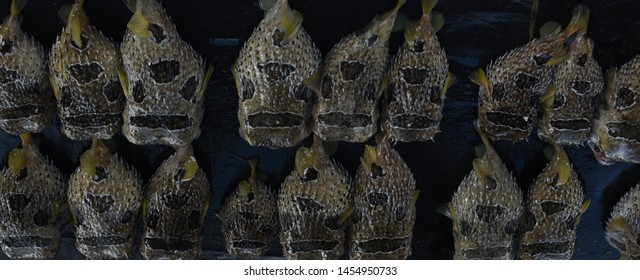 Tetraodontidae is primarily marine and estuarine fish of the order Tetraodontiformes. Also called pufferfish, puffers, balloonfish, blowfish, blowies, bubblefish, globefish, swellfish, toadfish.