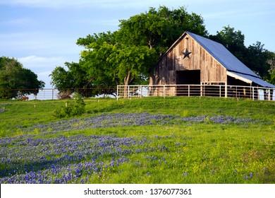A texas barn in a meadow of bluebonnets