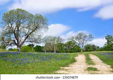 Texas bluebonnet vista along country road with beautiful blue sky and white clouds