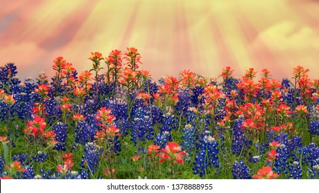 Texas bluebonnets and Indian Paintbrush wildflowers blooming on the meadow in spring. Beautiful setting sun sky background.