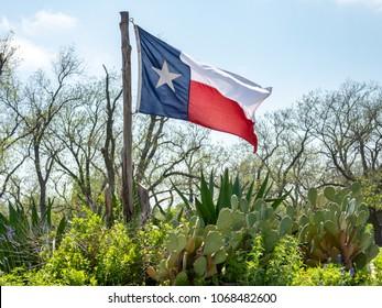 Texas Flag On the Wind With Cactus Plants On the Sun