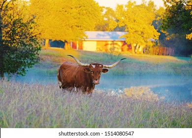 Texas Longhorn in autumn countryside landscape.