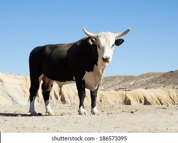 Texas longhorn bull breed with sawed with his horns against the sky