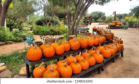 Texas Pumpkin Display