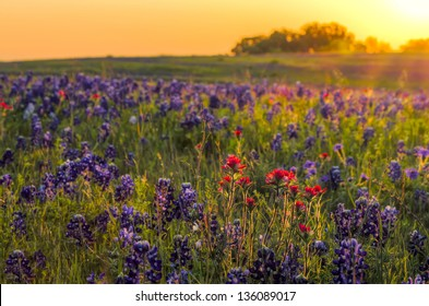 Texas wildflowers awash in early morning sunshine
