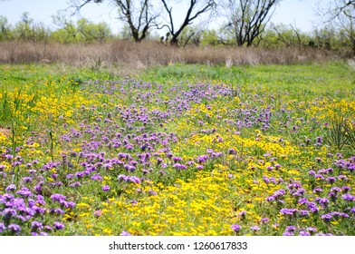 Texas Wildflowers field in the nature.