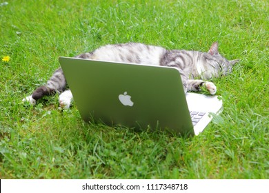 Texel, Dutch - 5 June 2018.: Apple computer and cat. Photo of a MacBook Pro. MacBook Pro is a laptop developed by Apple Inc.