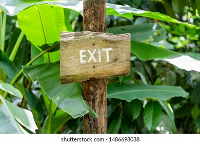 Text exit on a wooden board in a rainforest jungle of tropical Bali island, Indonesia. Exit wooden sign inscription in the asian tropics. Close up