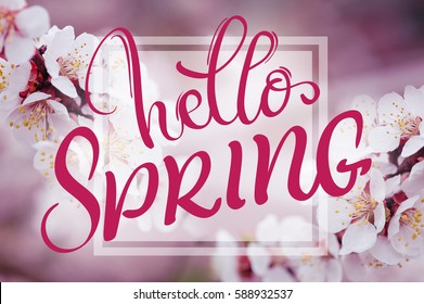 text Hello Spring. Calligraphy lettering and Beautiful branch of a blossoming tree on background