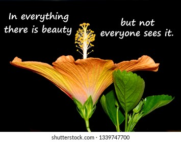 Text message reading, In everything there is beauty but not everyone sees it, on a close up photo of a beautiful orange Hibiscus flower isolated on black.