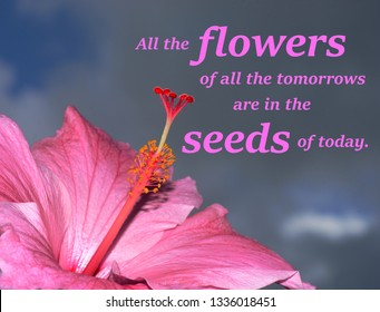 Text message saying, All the flowers of all the tomorrows are in the seeds of today, with a close up photo of a pink magnolia flower against the sky.