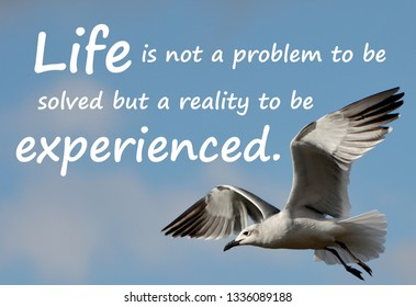 Text message saying, Life is not a problem to be solved but a reality to be experienced, on a closeup photo of a Seagull flying against a blue sky with clouds.