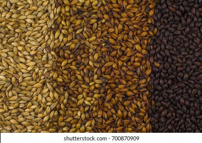 Texture with 4 types of barley malt for beer, pale ale mal a black. Gradient color.