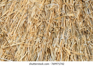 Texture associated dry tall grasses sedges in perspectives