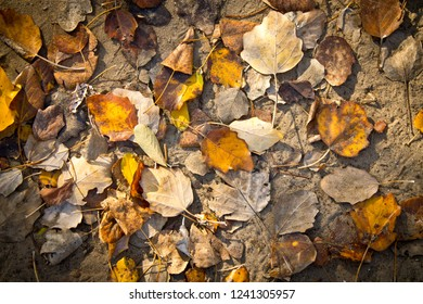 texture of autumn foliage