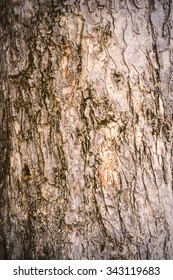 texture background -  bark of an old tree