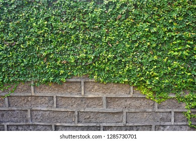 Texture background brick masonry with a plant