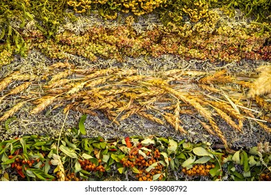 Texture background Dry grass collected in the mat. Excellent flavored design solution. vegetation consisting of typically short plants with long narrow leaves, growing wild or cultivated