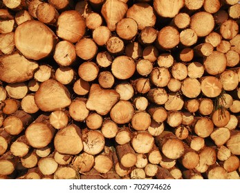 Texture, background of fresh wood, logs of wood