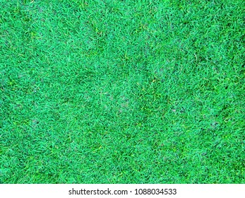 texture background green grass, Green lawn for Football field or futsal