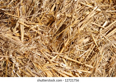 texture background of hay
