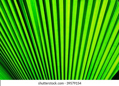 Texture background of palm leaf
