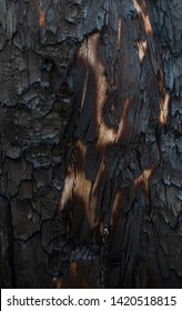 Texture of bark of a burned tree. Coal and carbon.