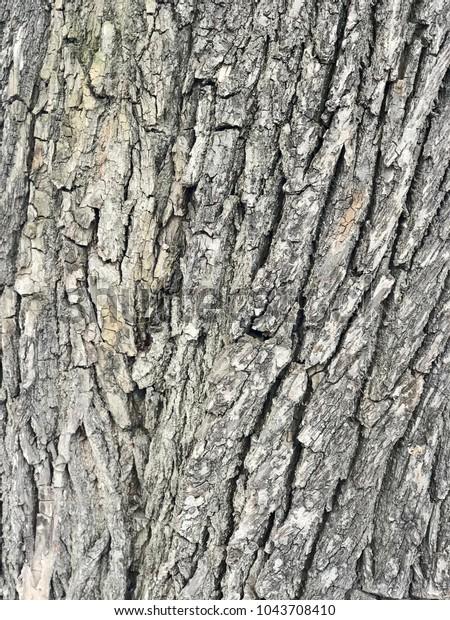 texture-bark-tree-600w-1043708410.jpg
