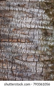 Texture of the bark of a tree. Tree bark, background
