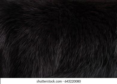 Texture beautiful black fluffy fox fur close-up. Black background