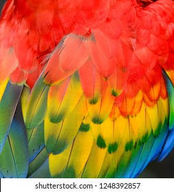 Texture of beautiful feather Macaw bird close up line detail and color. Multicolored of bird feather used for  decorate background  to make your work stand out.