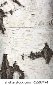 Texture of birch bark, background