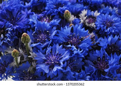 Texture of blue cornflowers. Blue wildflowers closeup wallpaper. Summer floral pattern.
